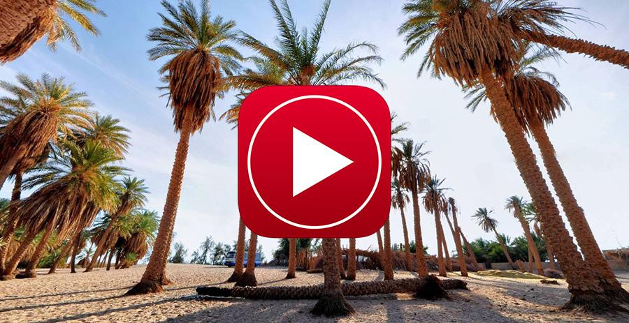 تور مجازی نخلستان های کویر شهداد کرمان - عکس پانوراما نخل های درخت خرما 360 درجه